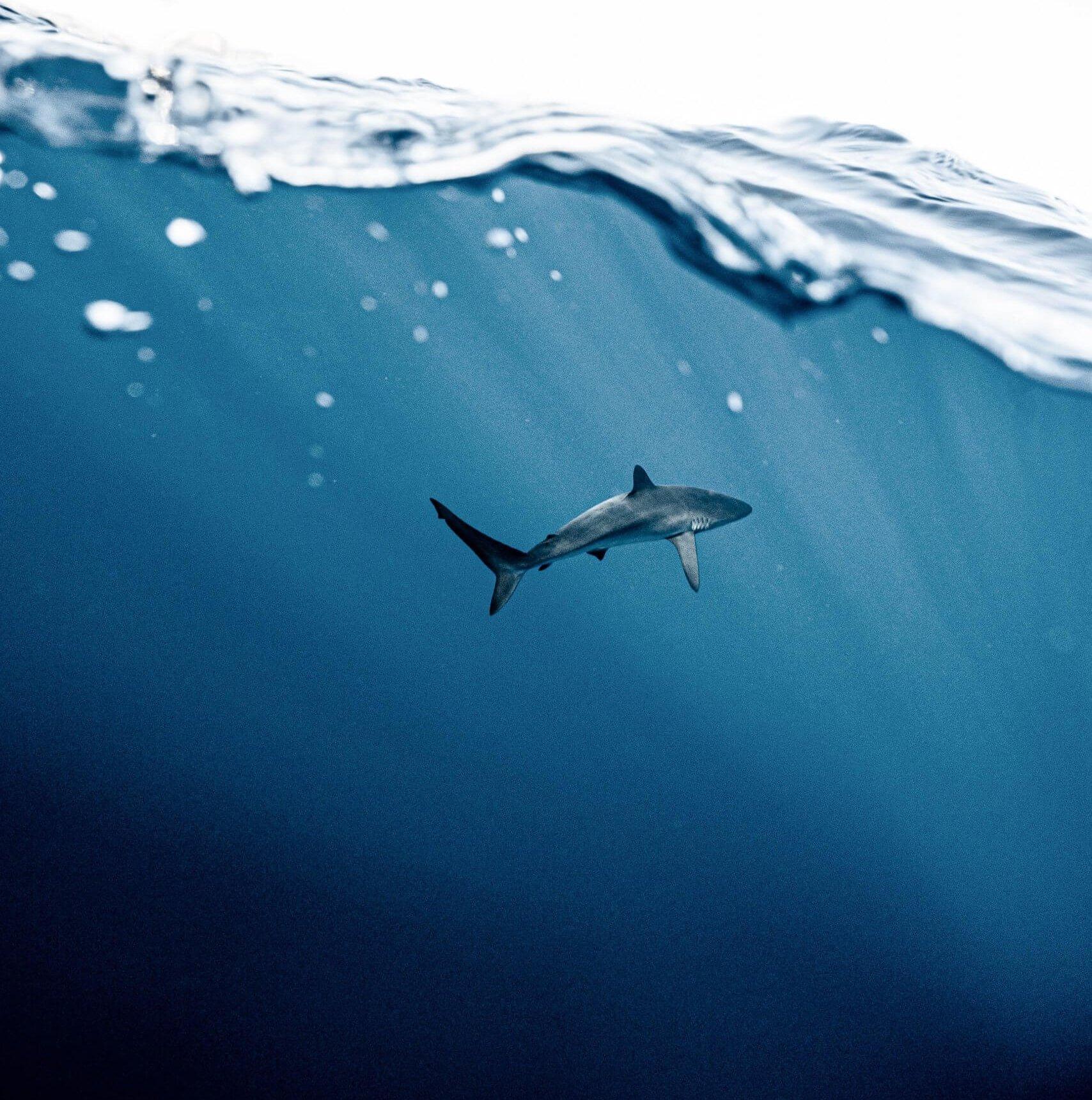 10 curiosità sugli squali