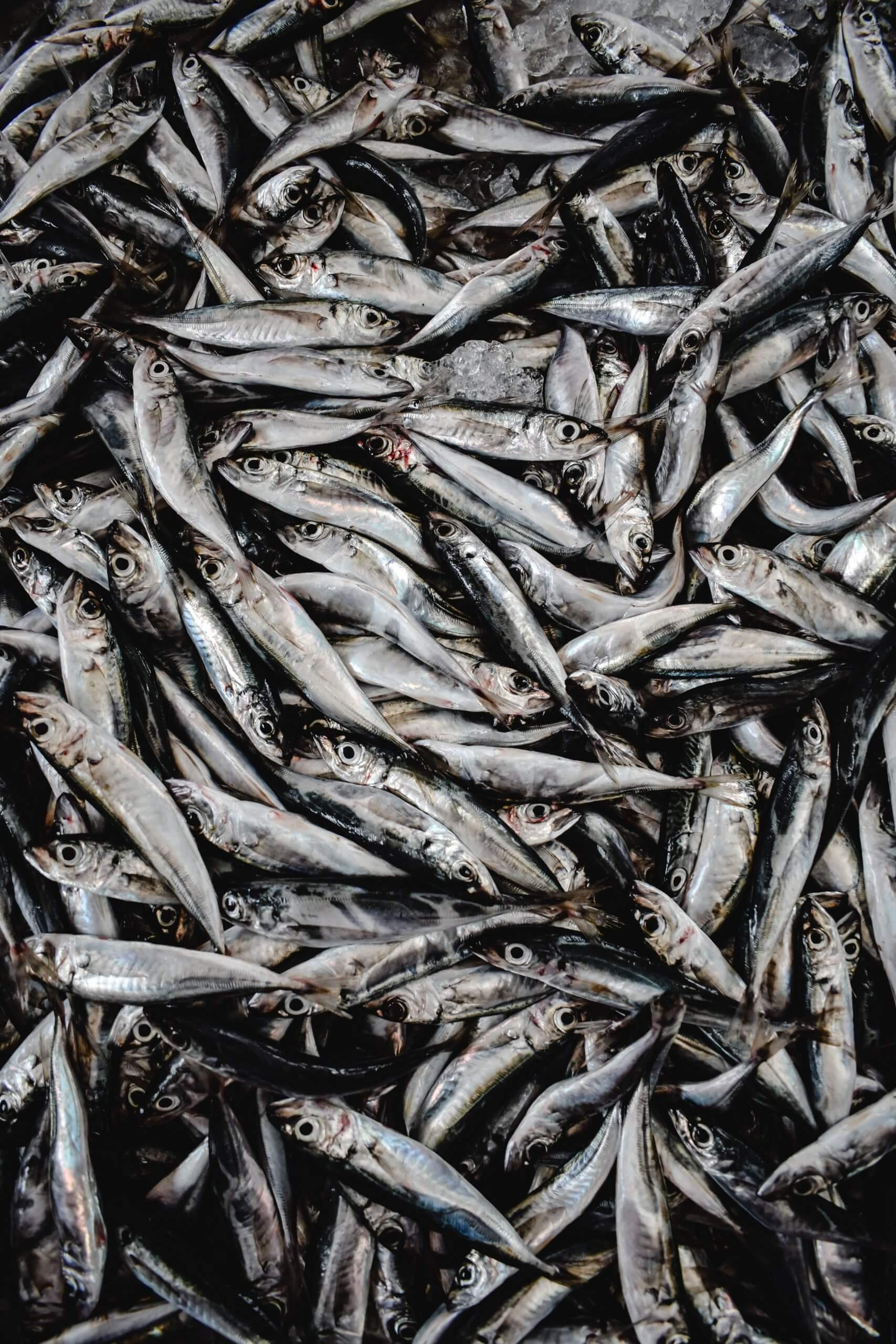 I 100 giorni de Gornonn-a: la salatura delle acciughe in Liguria