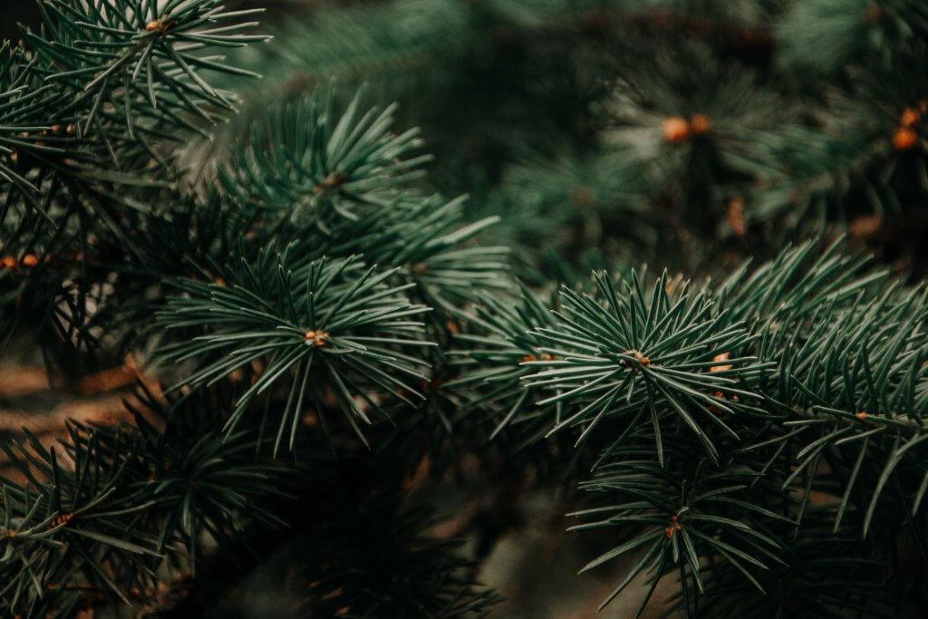 Natale Sostenibile_Worldrise