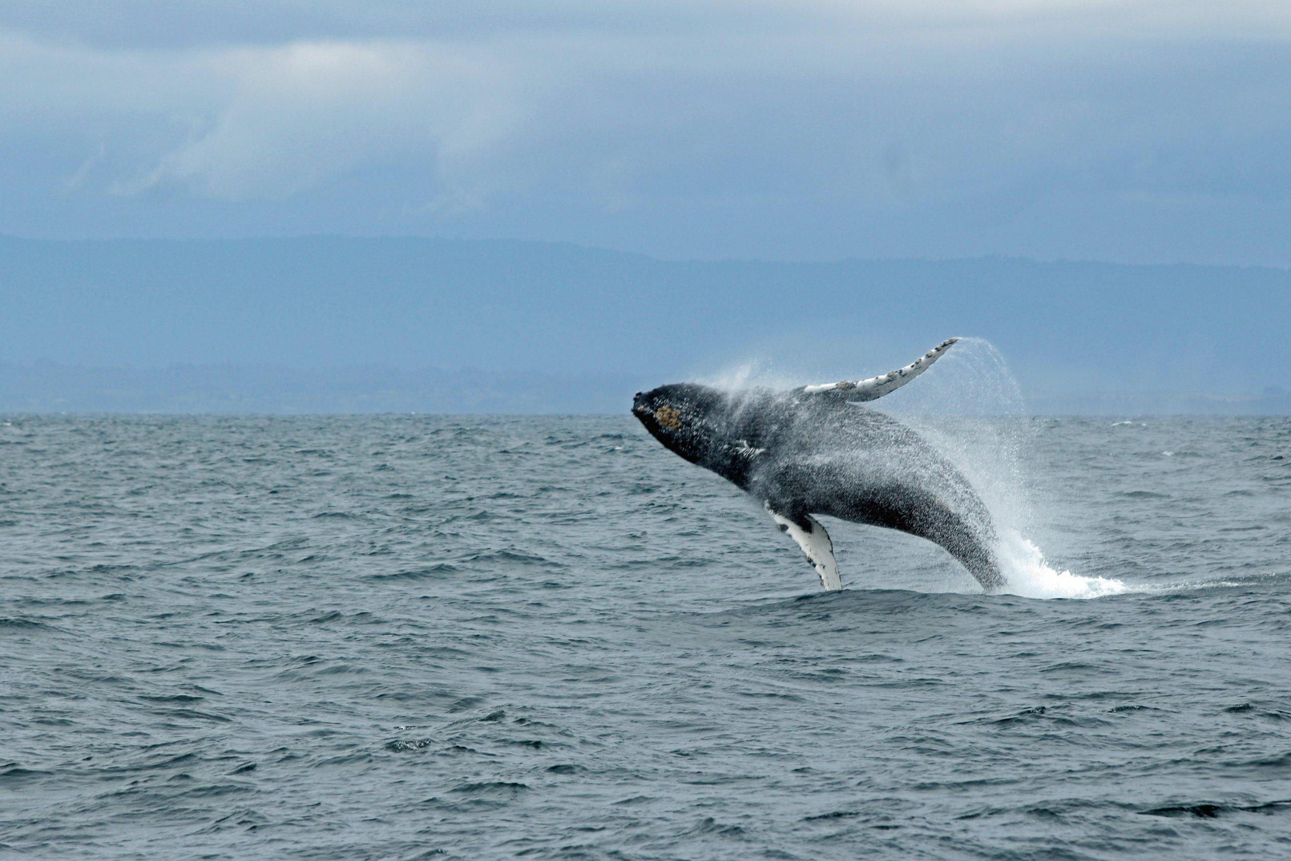 """Whale watching sostenibile e responsabile: in Europa il primo sito """"Patrimonio delle balene"""""""