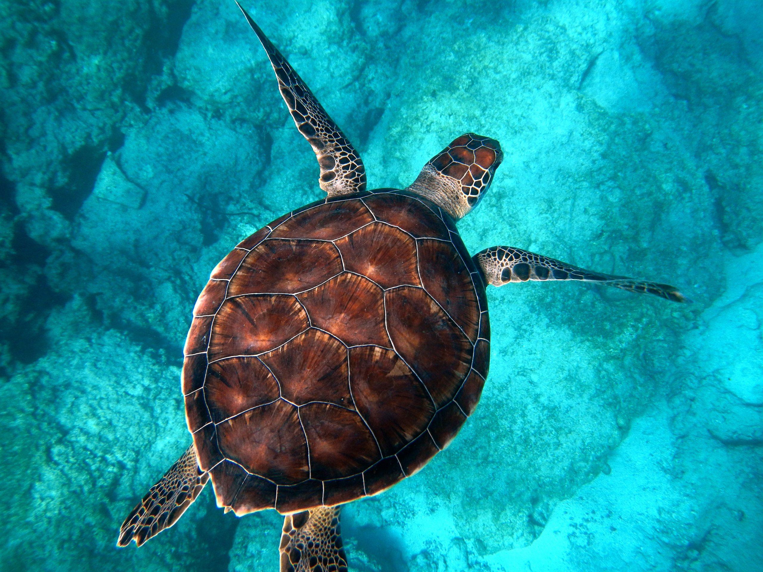 10 curiosità sulle tartarughe marine