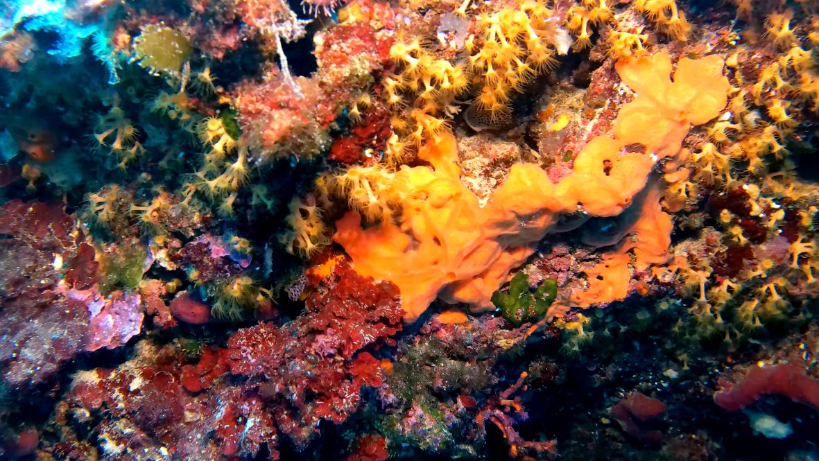10 curiosità sul coralligeno