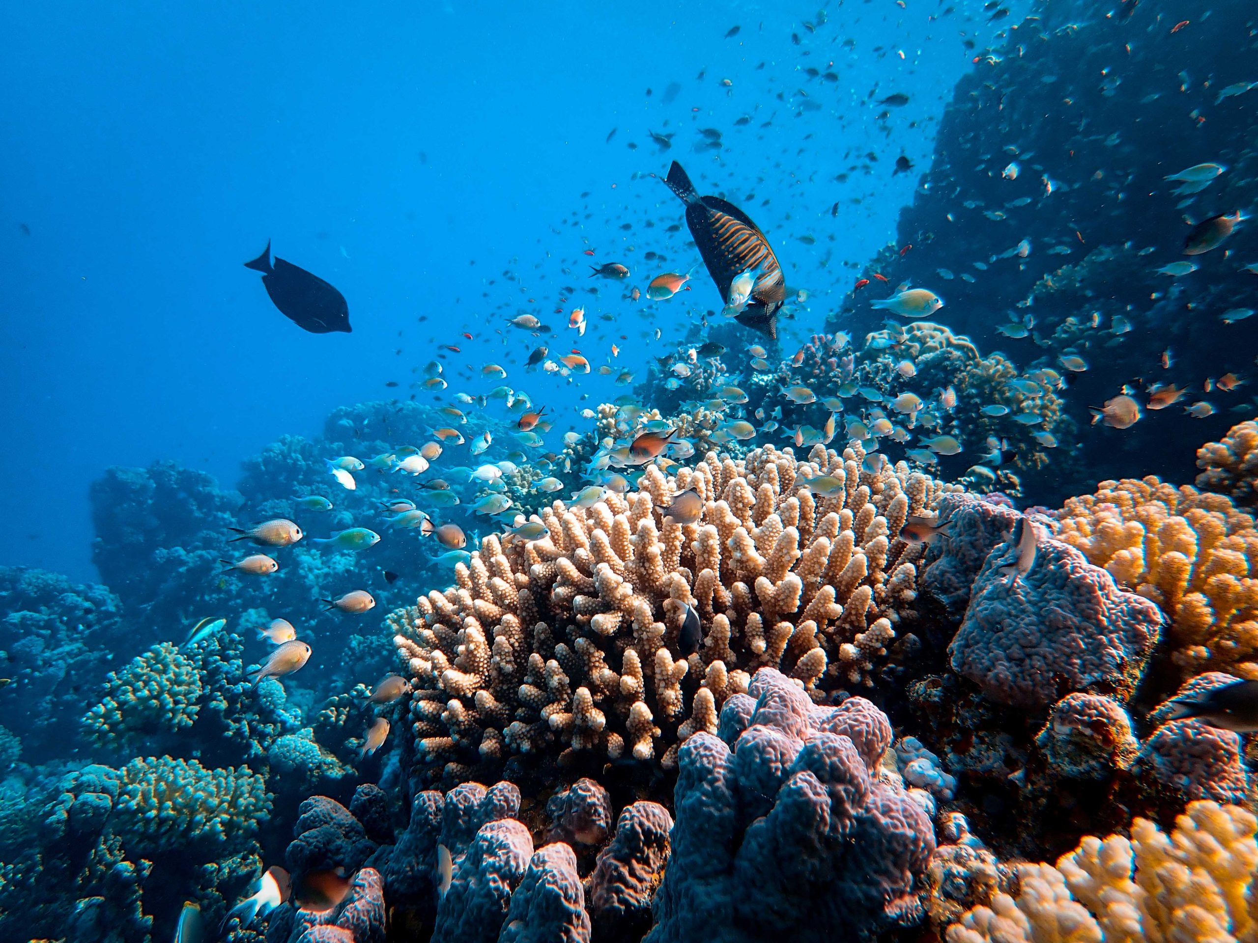 UNESCO recommends Great Barrier Reef to be included in List of World Heritage in Danger